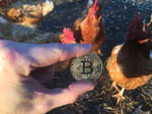 Free Bitcoin Stock Photo of Chickens #3