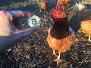 Free Bitcoin Stock Photo of Chickens #5