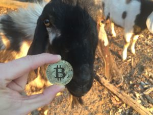 Free Bitcoin Stock Photo of Goat #1