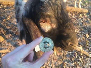 Free Bitcoin Stock Photo of Goat #3