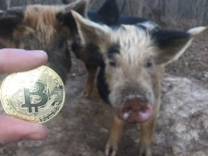 Free Bitcoin Stock Photo of Pig #1
