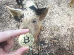 Free Bitcoin Stock Photo of Pig #3