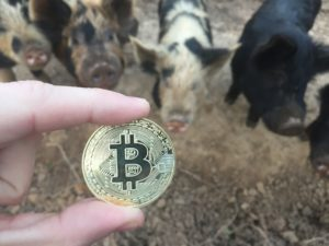 Free Bitcoin Stock Photo of Pig #5